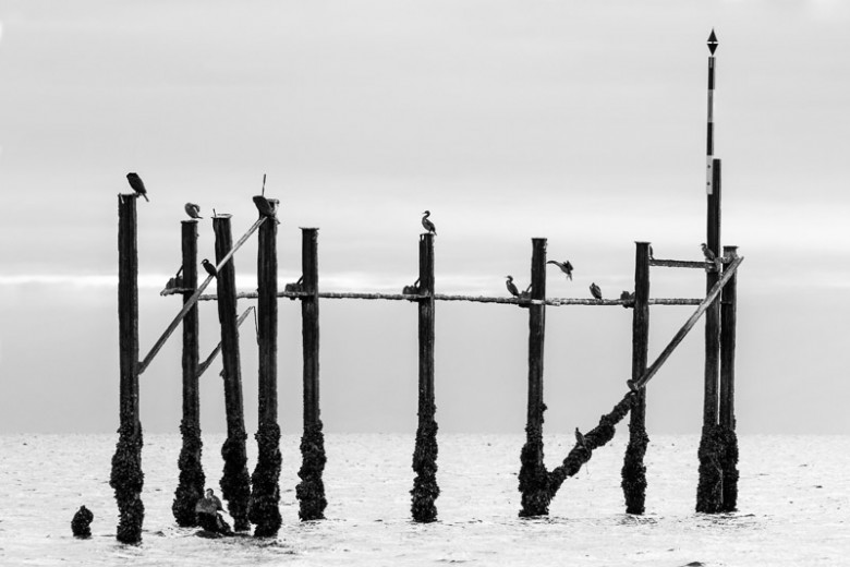 Birds on a Wharf, New Zealand Fine Art Photo Print. Seabirds rest on the remnants of the wharf built in the early 1920 by the Onekaka Iron Works in Golden Bay.